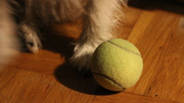 A Tennis Ball and Paws