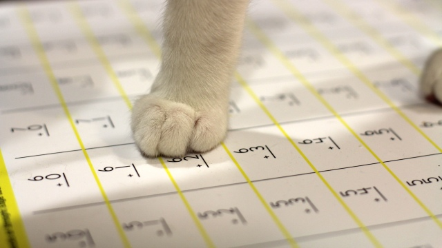 Kitten, Paws and Arithmetic