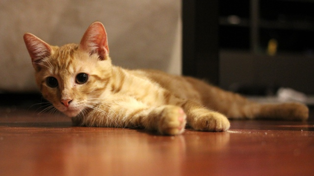 Redheaded Kitten