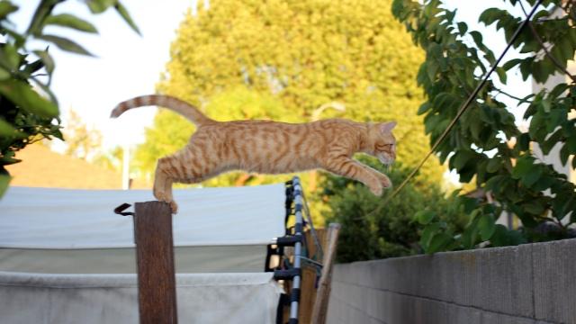 Tabascus takes a leap