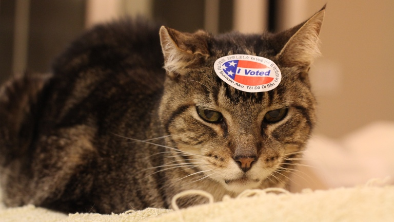 Snacker Voted